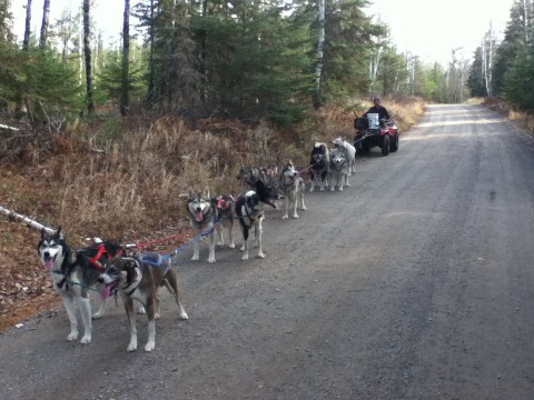 Training sled dogs
