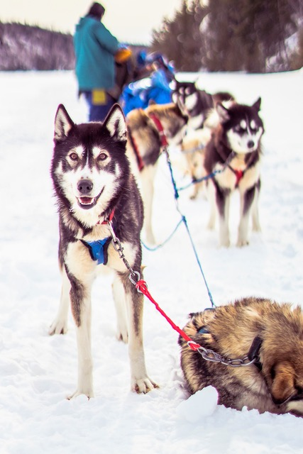 Photo taken on a Boundary Waters Dog Sledding & Cross Country Skiing for Adults expedition. Photo courtesy of Kate Samp.