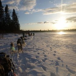 Dog Sledding with Outward Bound