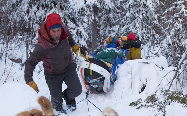 boundary waters dog sledding for adults