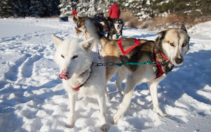 teens learn dog sledding in minnesota