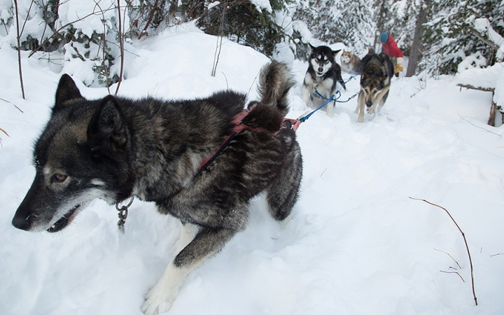 boundary waters minnesota dog sledding