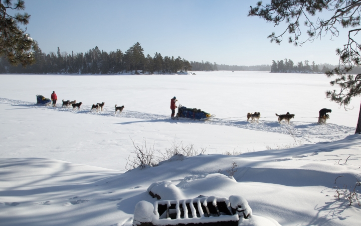 dog sledding trip in minnesota
