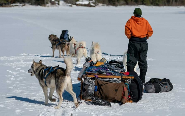 learn how to dog sled