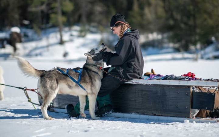 dog sledding lessons in minnesota
