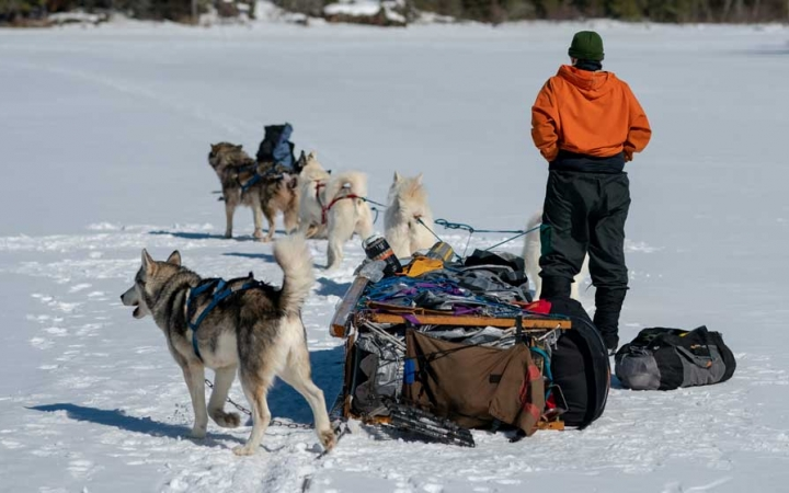 build character dog sled