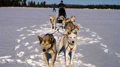 Dog sledding classes and courses